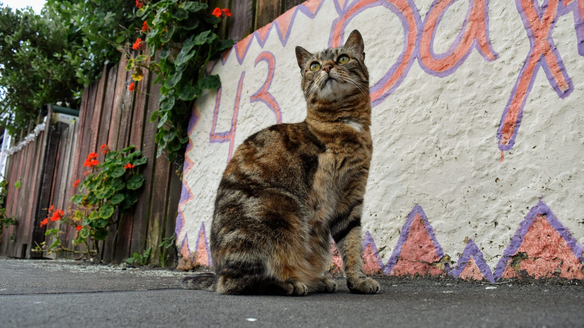 Famous Cats Of Wellington Whywellington
